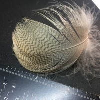 Egyptian Goose Large Hackles (10)