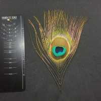 Peacock Herl Eye Medium