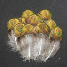 Peacock Shell Feathers (10x)