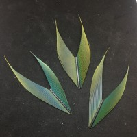 Green Macaw Tail