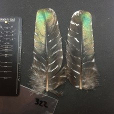 Ocellated Turkey Wing Covert Pair #322