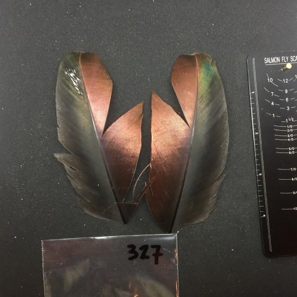 Ocellated Turkey Wing Covert Pair #327